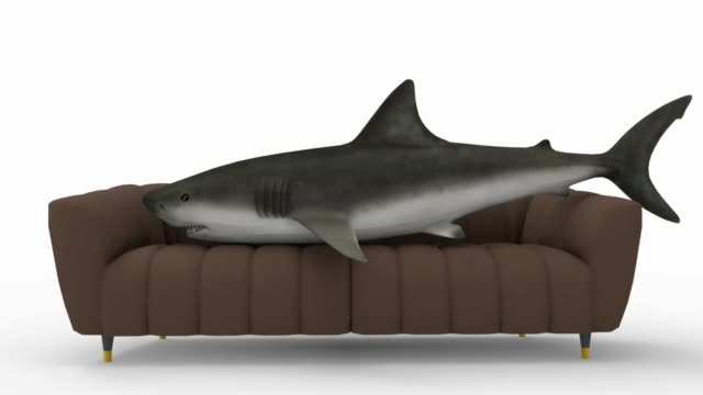 Comfortable sofa. If only a shark could, he would lie down on it