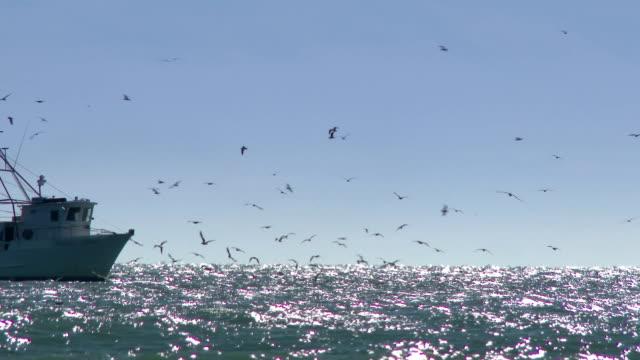 commercial fishing boat - fiskebåt bildbanksvideor och videomaterial från bakom kulisserna