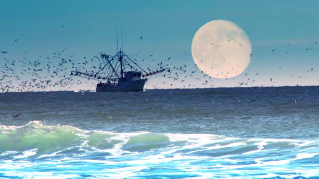 kommerzielle fischerboot - netzgewebe stock-videos und b-roll-filmmaterial