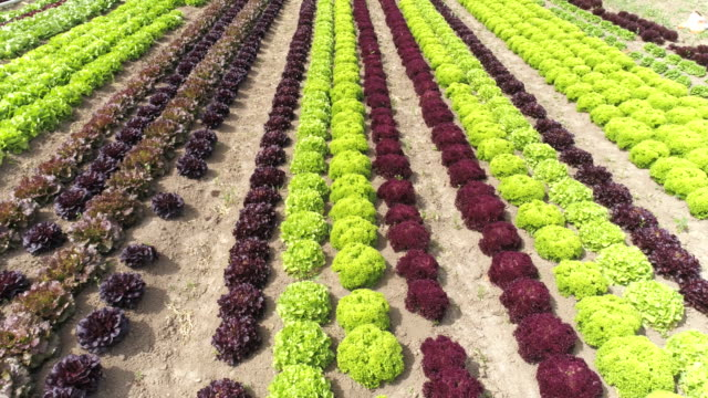 Jardin potager commercial Flyover - Vidéo