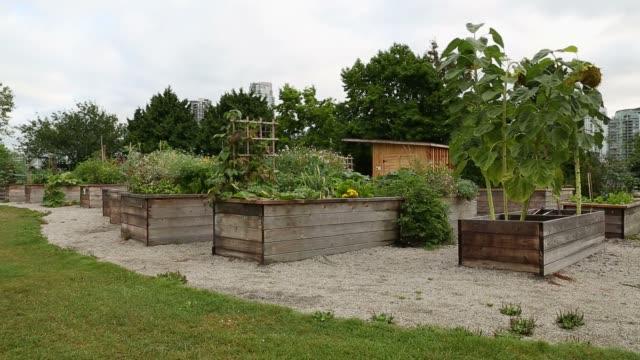 community garden, vancouver - urban gardening stock-videos und b-roll-filmmaterial