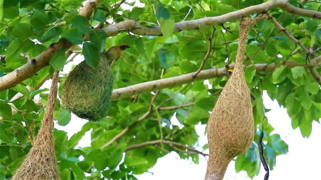 Community of Birds on Tree video