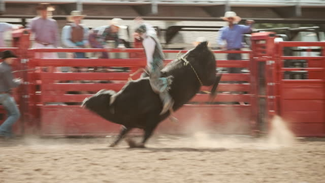 competition rodeo bull riding - rodeo stock videos and b-roll footage
