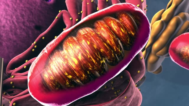 Components of Eukaryotic cell, nucleus and organelles - 3d illustration