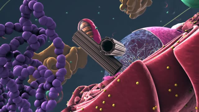 Components of Eukaryotic cell, nucleus and organelles and reticulum - 3d illustration
