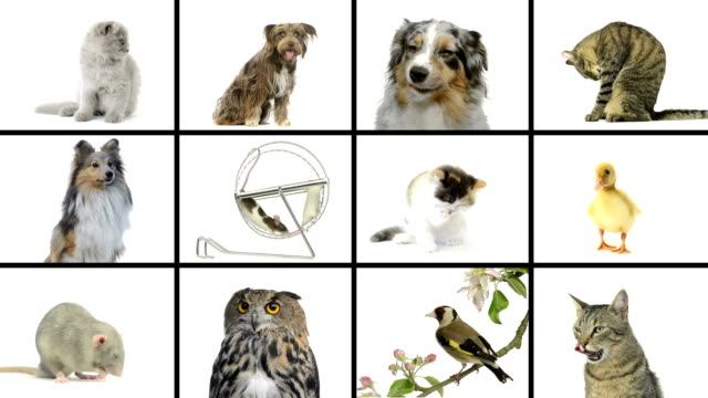 Composition of pets video