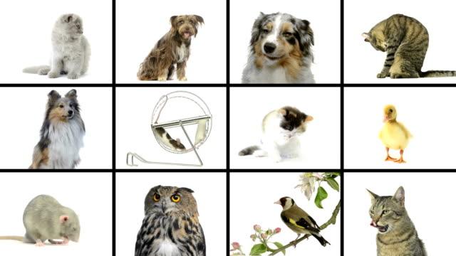 Composición de las mascotas - vídeo