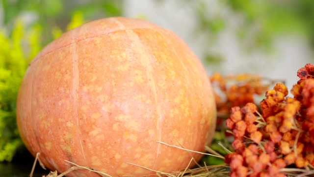 composition of pumpkins and autumn flowers and berries. thanksgiving and helluin - thanksgiving background stock videos & royalty-free footage