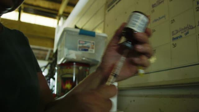 compound clip av en kvinnlig veterinär fylla en spruta med medicin och injicera en brun häst i en lada på en gård - veterinär, undersökning bildbanksvideor och videomaterial från bakom kulisserna