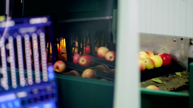computerized Equipment in a factory for washing, drying and sorting apples. Ripe apples sorting by size and color, then packing. industrial production facilities in food industry video
