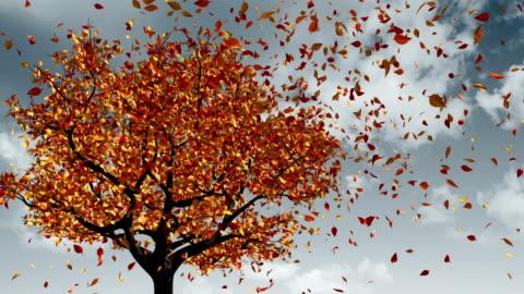 vídeos y material grabado en eventos de stock de concepto de cambio de las estaciones de primavera a otoño - caer