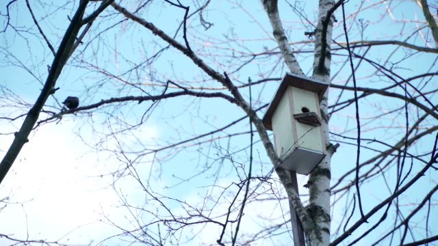 Concept of spring, family home and relations. Starling next to the birdhouse. Birds build a family video