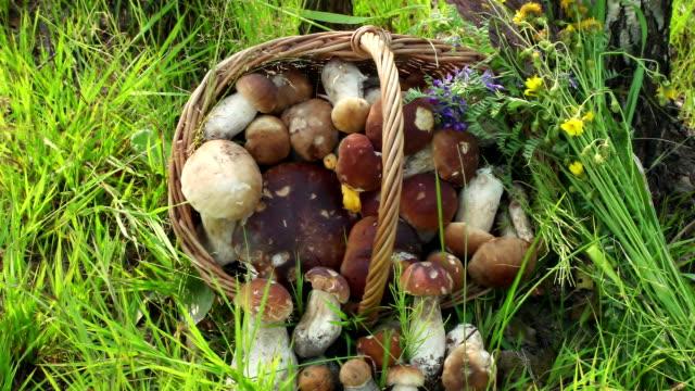 begreppet ekologisk naturlig produkt, djurliv. svamp i korg. dolly vänster höger - höst plocka svamp bildbanksvideor och videomaterial från bakom kulisserna