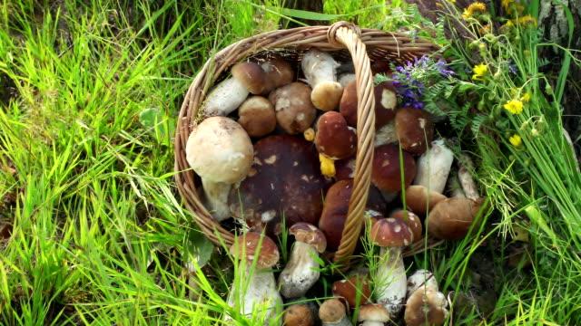 begreppet ekologisk naturlig produkt, djurliv. svamp i korg. dolly höger vänster - höst plocka svamp bildbanksvideor och videomaterial från bakom kulisserna