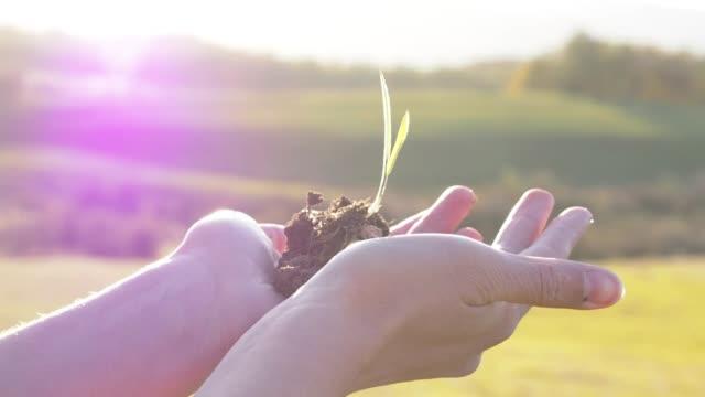 Konzeptionelle Video für Earth Day von Frauenhand hält eine Pflanze – Video