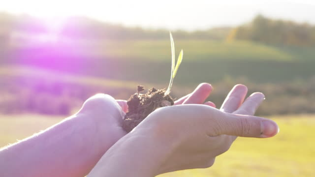 Conceptual video for Earth Day of woman's hands holding a plant video