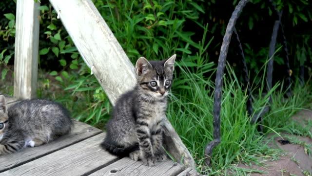 スローモーションで懸念されたタビー子猫 - ネコ科点の映像素材/bロール