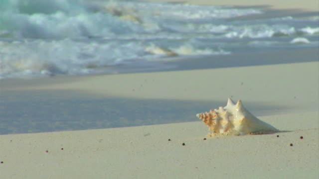 vídeos de stock e filmes b-roll de búzio na praia - bugio