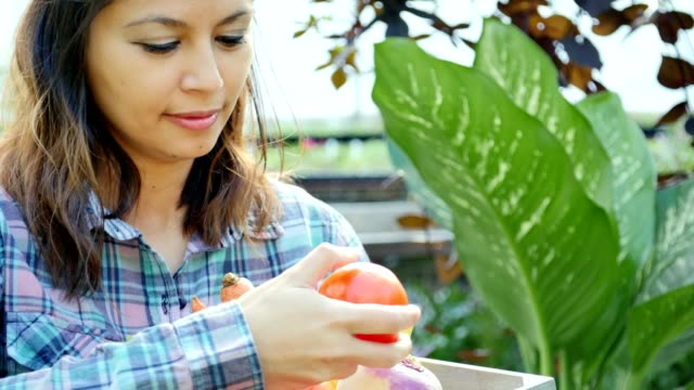 Confident farmer's market employee checks ripeness of tomatoes video