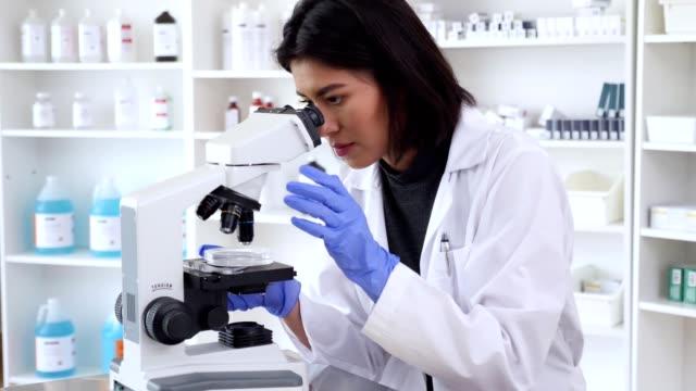 vídeos de stock, filmes e b-roll de o cientista fêmea confiável examina a amostra com microscópio - amostra científica