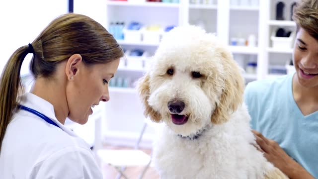 Confident female veterinarian asks teenage pet owner questions about his dog Mid adult female veterinarian takes notes while talking with male teenage dog owner. Camera moves from the medical chart up to the vet talking with the teenage boy. The boy is petting the dog while talking with the vet. veterinarian stock videos & royalty-free footage