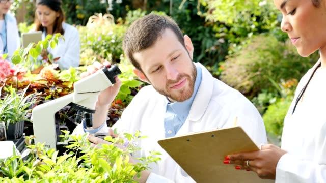 vídeos y material grabado en eventos de stock de confianza hombre botánico examina muestras de planta en vivero - botánica