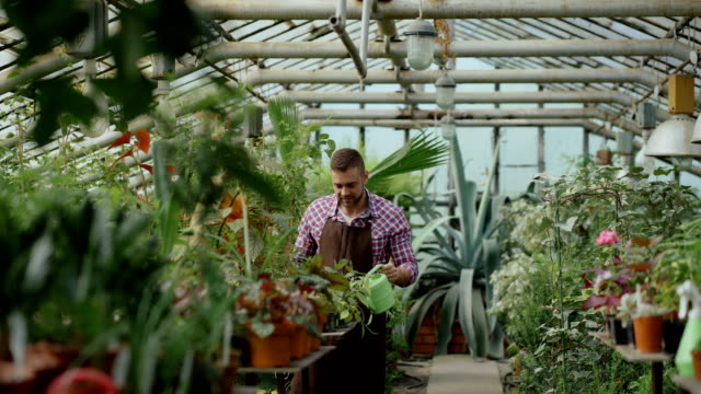 confident male gardener watering plants at greenhouse with pot. attractive young man enjoy his job in garden - semenzaio video stock e b–roll