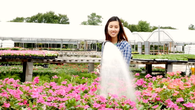 Confident plant nursery employee waters flowers video