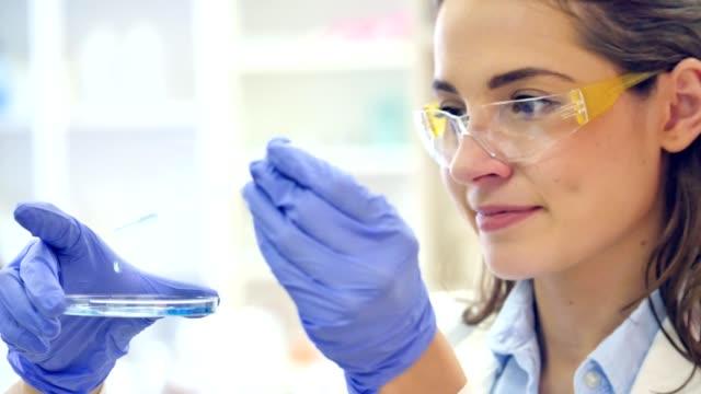 科学者は、研究室でペトリ皿に液体を落とす自信があります。 ビデオ