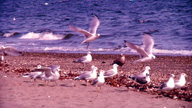 Congregation of Seagulls video