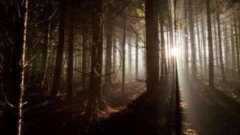 vídeos de stock e filmes b-roll de t/l floresta de coníferas ao amanhecer - escuro