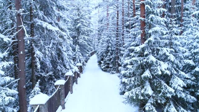 barrskog, staket och stig i snön. - djupsnö bildbanksvideor och videomaterial från bakom kulisserna