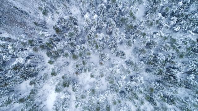 雪に覆われた冬の針葉樹林。トウヒや松の木。空撮。前方に飛んでいます。 - シベリア点の映像素材/bロール