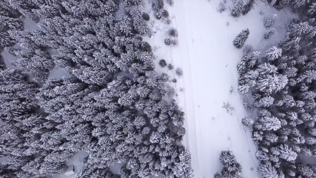 Coniferous forest, the road is strewn with snow and stands cars . View from above. Aerial view video