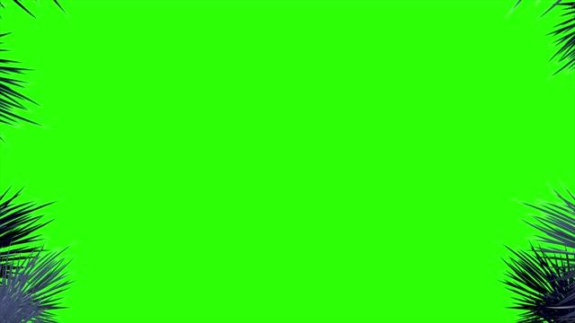 4k barrträdsgrenar och snöflingor i kanterna på skärmen på en grön bakgrund - christmas frame bildbanksvideor och videomaterial från bakom kulisserna