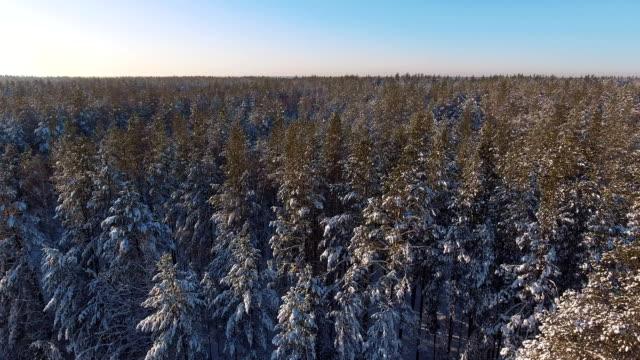 nadelwald winterwald mit schneebedeckten bäumen. luftbild - kieferngewächse stock-videos und b-roll-filmmaterial