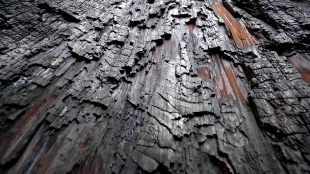 stockvideo's en b-roll-footage met gevolg van de opwarming van de aarde. textuur van ingezoomd in verbrande sequoiaboom in sequoia national park, californië, usa. macro abstracte opname - boomstam