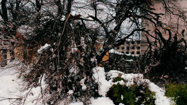 봄에서 눈 폭풍의 결과입니다. 깨진 꽃 나무, 눈 덮인 나뭇가지, 눈, 꽃, 눈, 기후 변화 - chuck lorre 스톡 비디오 및 b-롤 화면