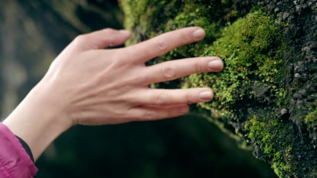 contact with nature. woman touching rocks and moss - pietra roccia video stock e b–roll