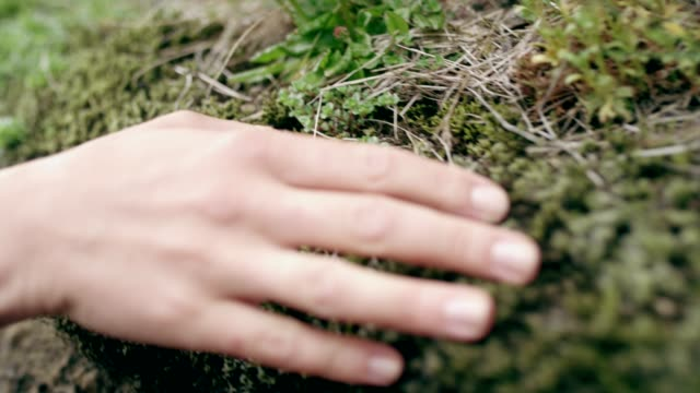 contact with nature. woman touching rocks and moss - muschio flora video stock e b–roll