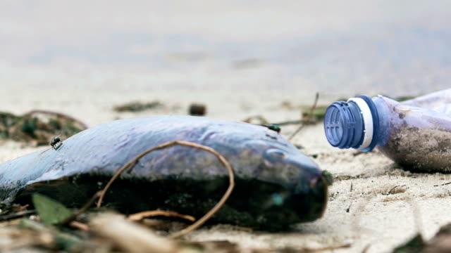 Contaminated seashore, environmental disaster, human footprint on the planet Contaminated seashore, environmental disaster, human footprint on the planet dead stock videos & royalty-free footage