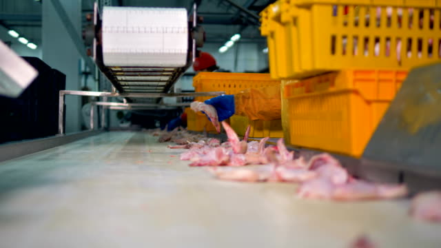 A conveyor full of chicken wings during collecting and packing. video