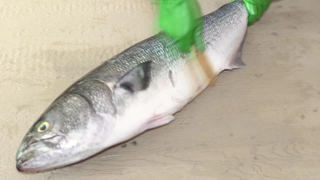 Cook cleaning blyufish on the scales video