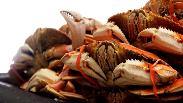cooked dungeness crabs - granchio video stock e b–roll