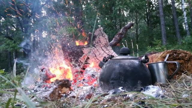 野生の地形でおいしいギッシュを調理。 - 自生点の映像素材/bロール
