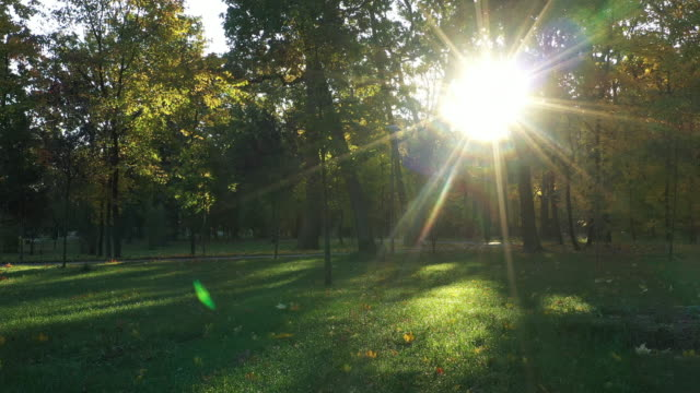 Cool autumn morning in the autumn park Slow drone flight in cool autumn park at dawn. natural parkland stock videos & royalty-free footage