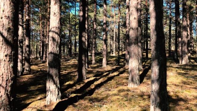 coola mossor och lavar i tallskogen i sverige-stockholms skärgård - älg sverige bildbanksvideor och videomaterial från bakom kulisserna