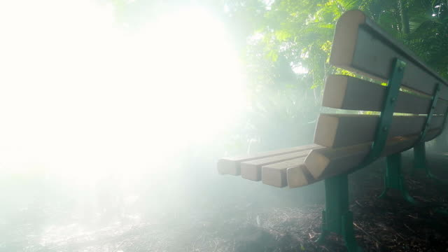 Cool shot of bench at jungle with bright natural lighting and smoke video