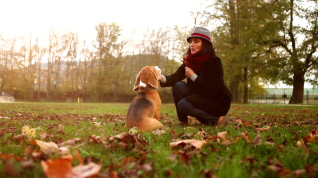Cool stylish lady teases her beagle with a treat until finally gives up video