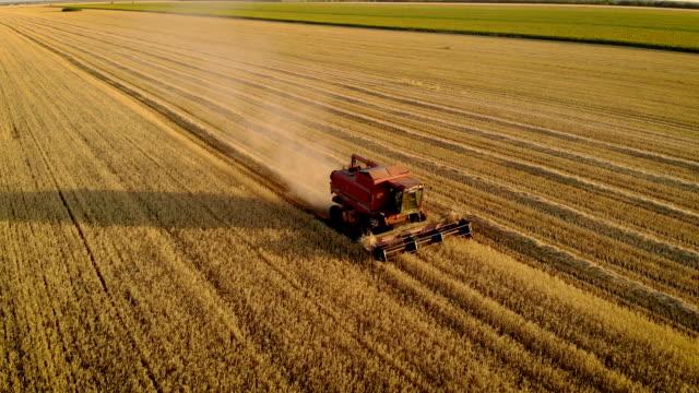 stockvideo's en b-roll-footage met copter vliegt over harvester die gewassen in mooi zonlicht maait bij zonsondergang - gerst